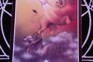 OSHO禅タロットのREBIRTH(再誕生)