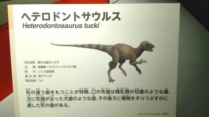ヘテロドントサウルスの説明