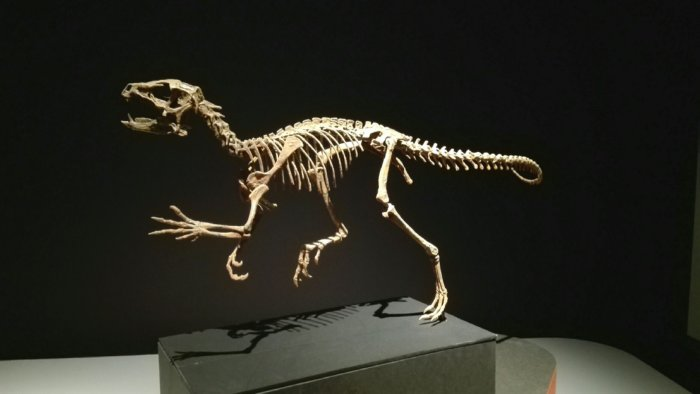 ヘテロドントサウルスの骨格