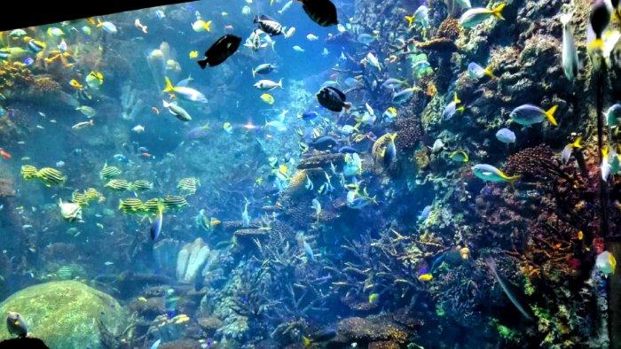 海遊館の熱帯エリア