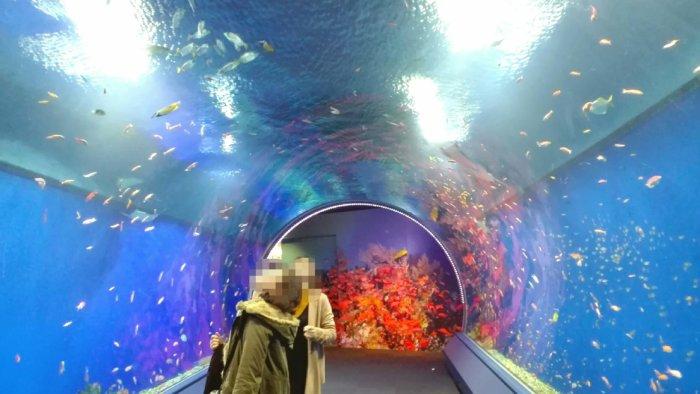海遊館の水中トンネル