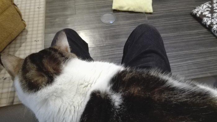 ソファーに座るや否や膝に乗ってきた猫