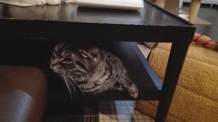 机の中からも猫が這い出てきた
