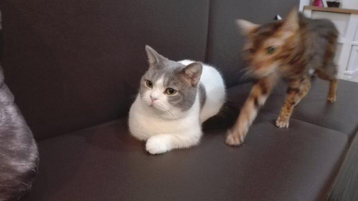 ソファーの上の猫