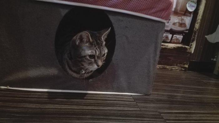ひょっこり顔をのぞかせる猫