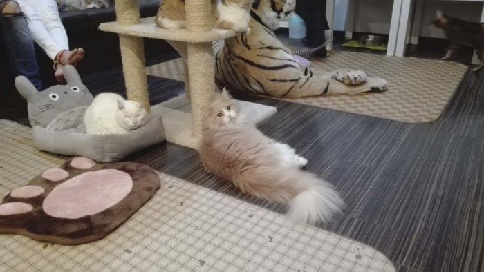こっちを向いて呼んでいる猫。ボルボ