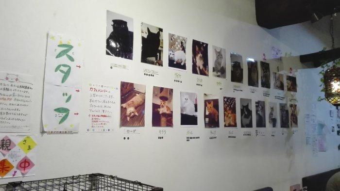 店内の壁には猫の写真がたくさん