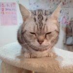 里親募集中!大阪の猫カフェ・マンチカン鶴橋店で癒されてきた