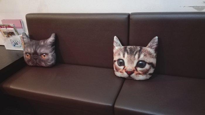 マンチカン鶴橋店内写真ソファー。クッションも猫