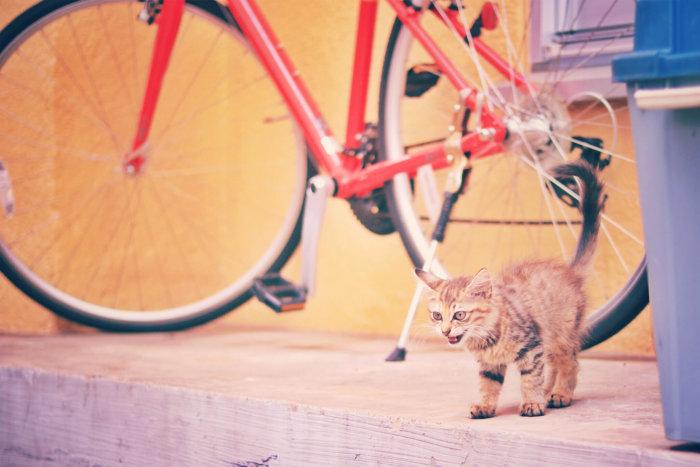 弱くても立ち向かう猫