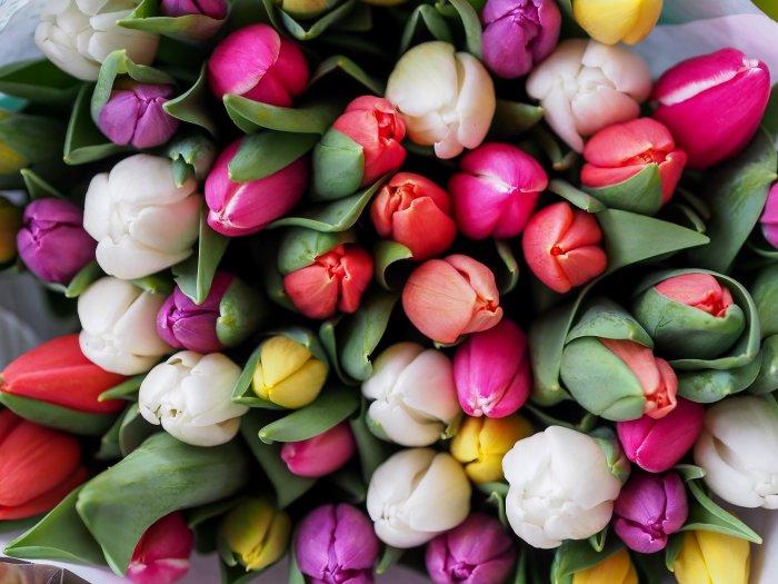 綺麗な花が沢山