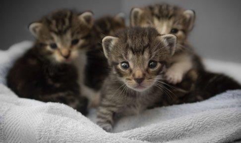 子猫たちが集まっている