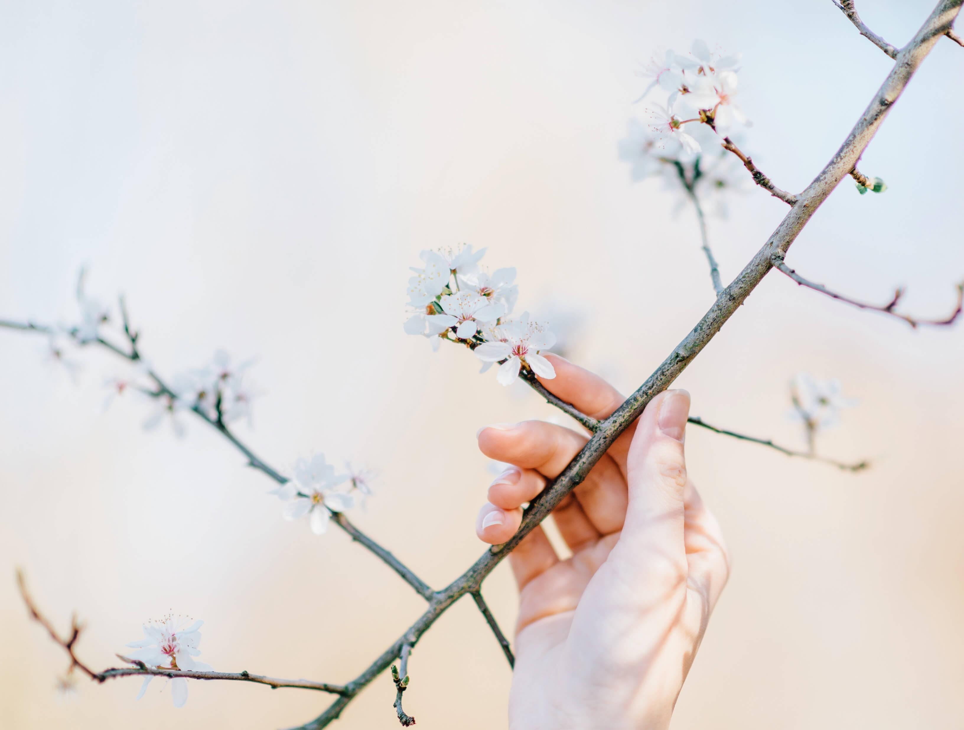 花をめでる女性