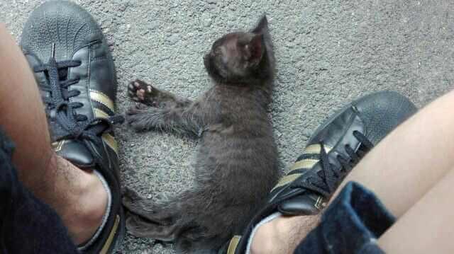 滋賀で出会った猫ちゃん。めっちゃなついてくれた