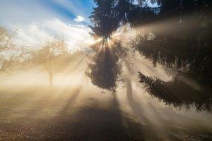 木々の隙間から神々しい光がさしている風景